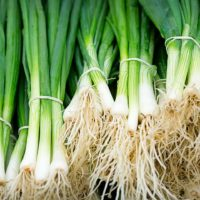 Vegetable - Spring Onion - 'White Lisbon' - 600 Seeds - UK SELLER